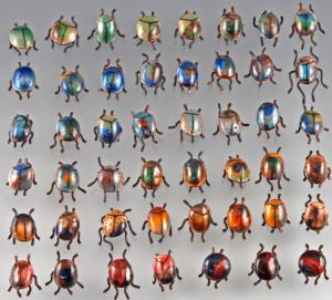Beetles_DSC_0020_small