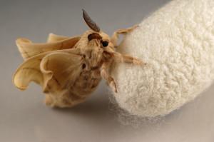 moth2_9_6_2013_small